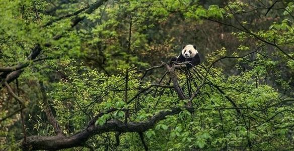 四川大熊猫数字科技发展有限公司官网